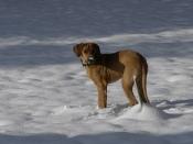Stryker Snow