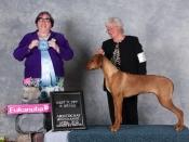 annie-hound-puppy