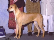Group 1 at the Sammamish Kennel Club show, March 2002