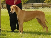 Asia (right) as a veteran at the 2007 WWHA specialty, shown with her son Atom who won Best Puppy.