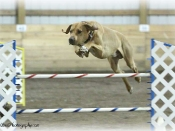 Atom in the agility ring.