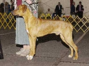 Bode, Reserve Winners Dog