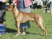 Bode, Winners Dog for a 3 point major at Del Valle in October 2007