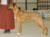 Bode, Best of Winners and NEW CHAMPION at the Timberland shows, Spring 2009