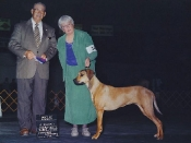 Best of Winners for a major at the Yakima Valley Kennel Club