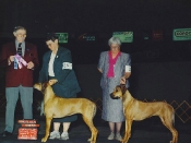 Reserve Winners Bitch (to her mother!) at the Yakima Valley Kennel Club