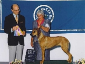 Best of Breed at the Mt. Baker Kennel Club