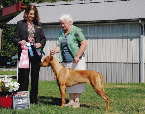 Thank you Diane McCormack for this wonderful win, Best Puppy Group 1 and Best of Winners, Best of Opposite for a  point major.