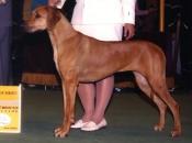 Award of Merit, Westminster Kennel Club, February 2005