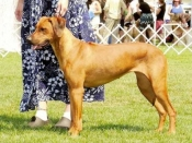 Winners Bitch and Best Opposite Sex (to her sire Jack), August 2009 at the Western Washington Hound Association show
