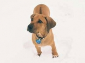 Zachary in the snow